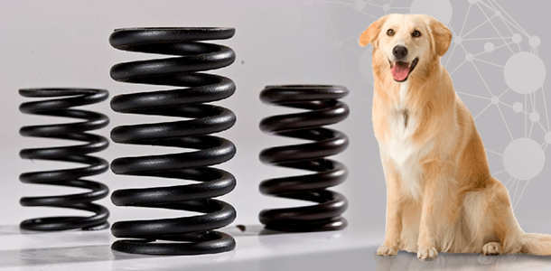 large compression spring next to standing dog